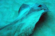 Blue Bottom Diving