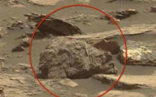 Fossilised grizzly bear spotted on Mars