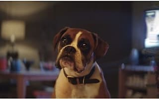 John Lewis releases upbeat Christmas ad starring Buster The Boxer