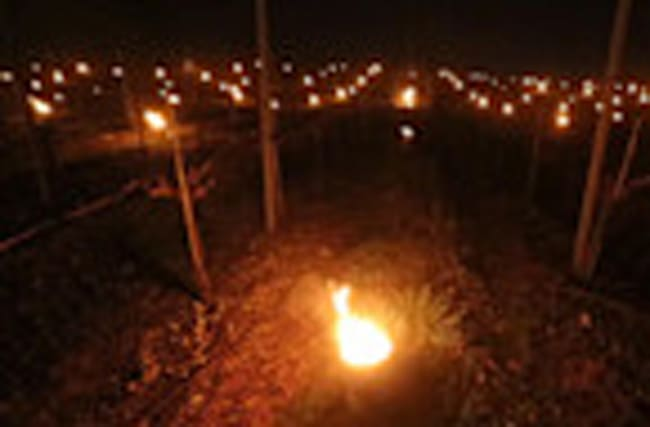 Vineyard illuminated by stunning candle display