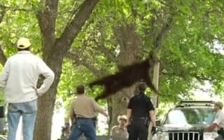 Famous flying bear killed in car accident