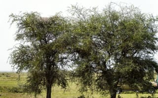Can you see the leopard hidden in the picture?