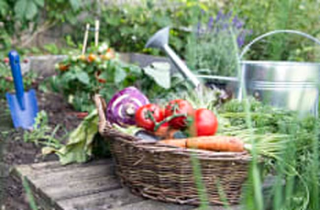 How home-grown vegetables can improve your mood
