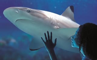 Win! A family day out at LEGOLAND Discovery Centre and SEA LIFE Manchester