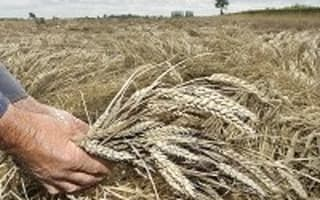 UK to import higher wheat volumes