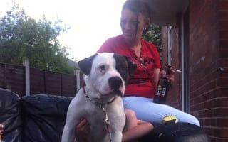 Royal Mail suspends mail on Blackburn street after dog bite