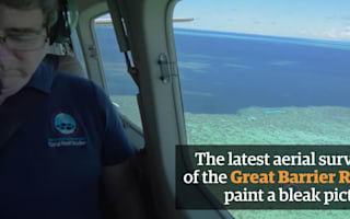 Great Barrier Reef 'bleaching' driven by climate change