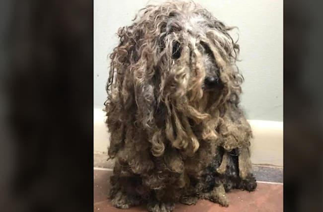 Matted dog found in barn and dubbed Bob Marley 'Is scared to death of people'