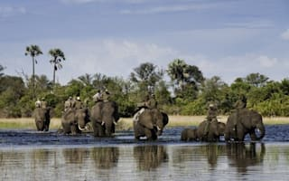 Editor's picks: Safaris in Africa... and beyond