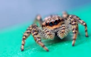 New £2bn theme park in Kent threatened by colony of rare spiders?