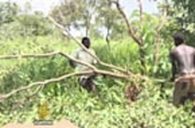 South Sudan witnessing alarming rise in deforestation