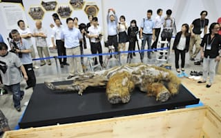 39,000-year-old woolly mammoth goes on display in Japan
