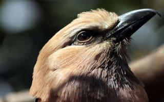 London Zoo shuts bird enclosures over avian flu concerns