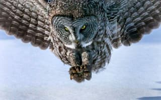 He's behind you! Amazing pic show unsuspecting mouse become owl lunch