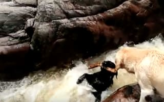 'Hero' dog saves friend from river rapids in Argentina