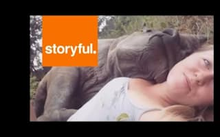 Baby rhino cuddles carer in heartmelting video