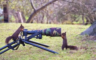 Red squirrels go nuts for the camera (photo)