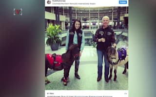 Airport brings in therapy horses to cheer up travellers