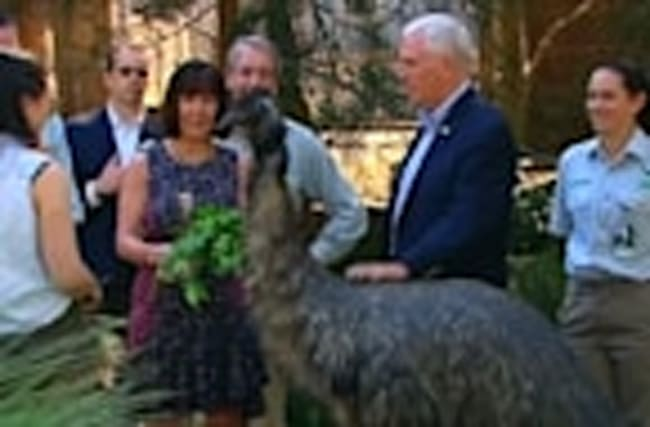 Pence gets friendly with Aussie wildlife, visits Sydney Harbour
