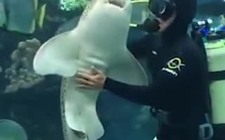 Shark and scuba diver become great friends