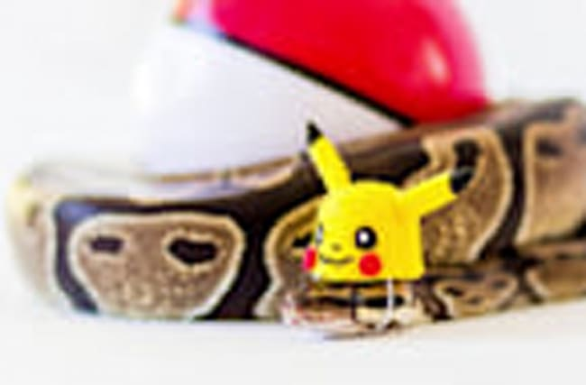 Fancy dressed snake takes the internet by storm