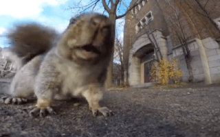 Squirrel steals GoPro camera and makes a run for it (video)