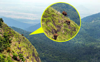 Have you ever seen elephants climb a mountain?