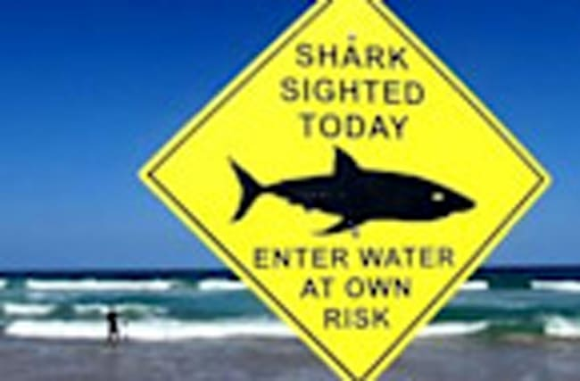 Shark attacks may hit new record in 2016