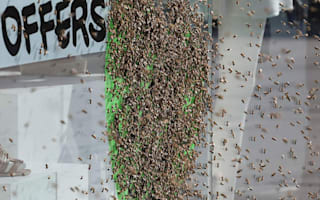 5,000 bees swarm Topshop window in central London