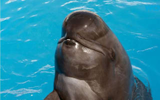 SeaWorld's oldest pilot whale dies