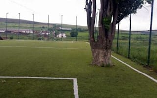 New football pitch has huge tree in the middle