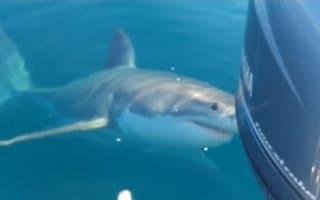 Fishermen berate great white shark as it circles boat
