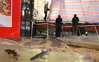 15 injured as 33-ton shark tank bursts in shopping centre