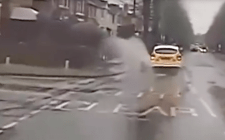 Hampshire police force apologise for splashing pedestrian