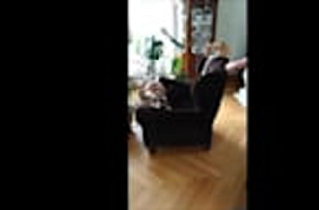 English Bulldog desperately tries to play with cat