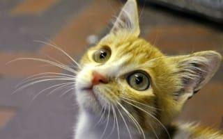 Cute kitten survives 3,000-mile flight from Egypt to UK