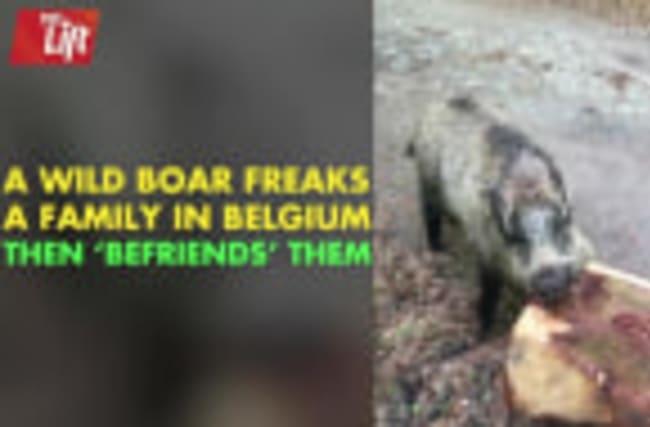 A Wild Boar Encounter You Won't Believe
