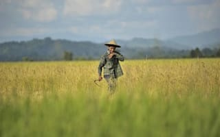 American farmers to export rice to China