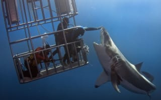 Man 'pats' huge great white shark in Mexico