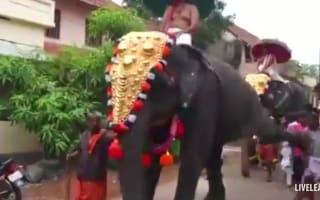 Parading elephant kicks man to the ground
