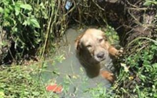 Police deputy adopts dog he rescued from a septic drain