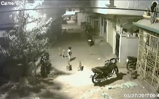 Little boy scares off pack of wild dogs