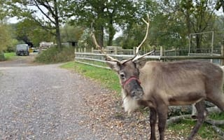 Dogs kill reindeer at Hampshire petting zoo