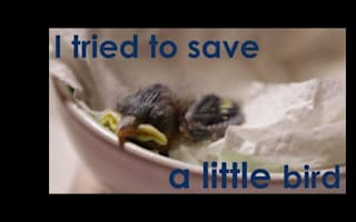 Man rescues baby bird that the cat dragged in