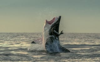 Lucky seal escapes great white shark's jaws in amazing picture
