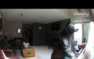 Bear breaks into family home and 'plays' piano