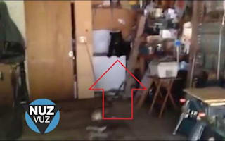 Family of bears breaks into a house: Residents get a shock