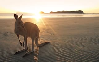 Australia's best two-week itineraries for wildlife-lovers