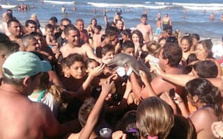 Baby dolphin 'killed' by tourists for selfies