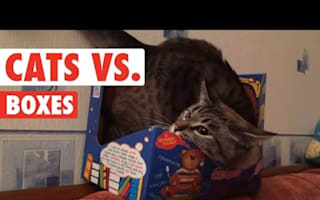 Cats vs cardboard boxes can entertain you for hours